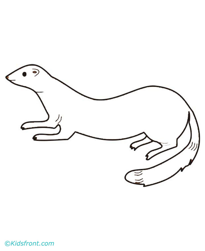 Free Coloring Pages Of Black Footed Ferret Ferret Coloring Pages