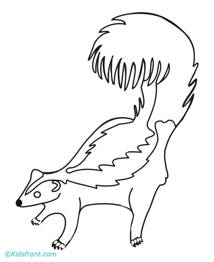 skunk coloring pages - the gallery for skunk drawing