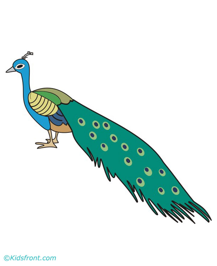 the gallery for gt peacock drawing with colour