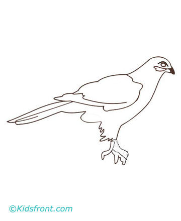 falcon.jpg (360×440)
