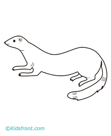 Ferret coloring pages printable for Ferret coloring pages