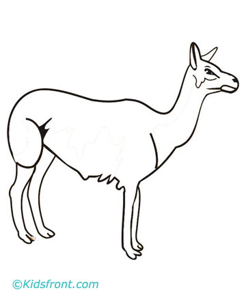 Ll is for Llama Coloring Pages @ The Doll Palace