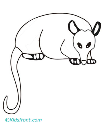 possum coloring pages for kids - photo#14