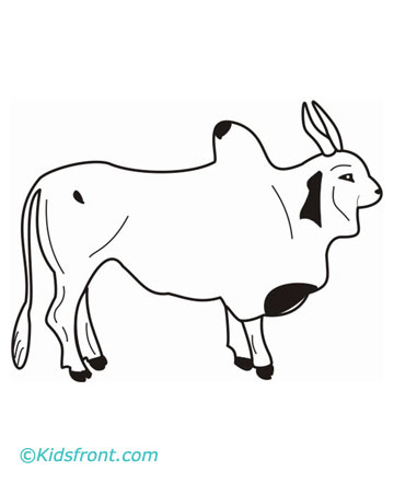 coloring pages of ox - photo#24