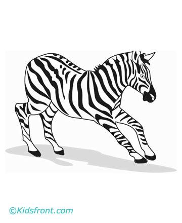 zebra without stripes coloring page - zebra coloringpage coloringpage spider mancoloringpages